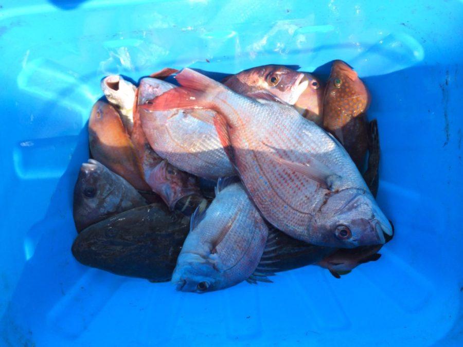 テンヤ真鯛、タイラバ