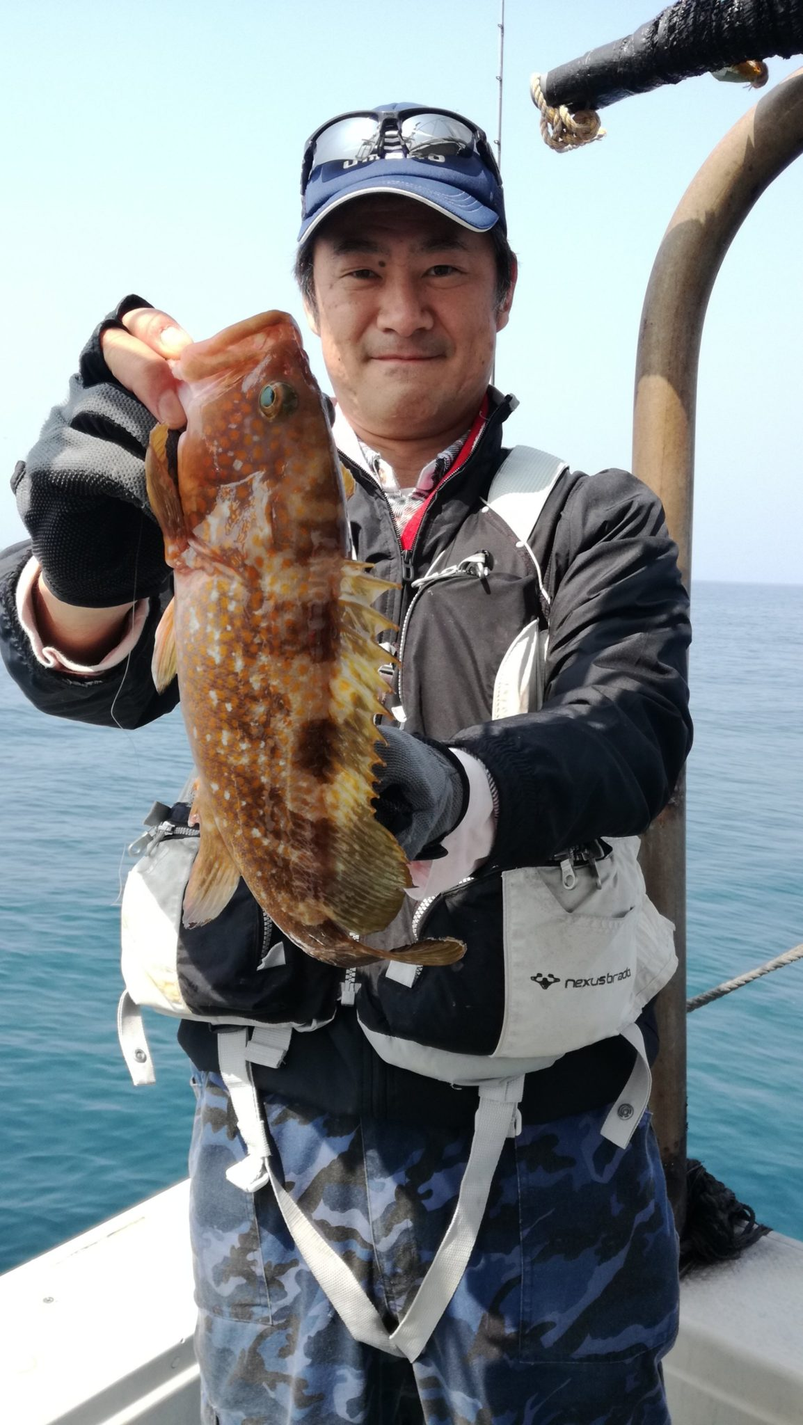 根魚、真鯛