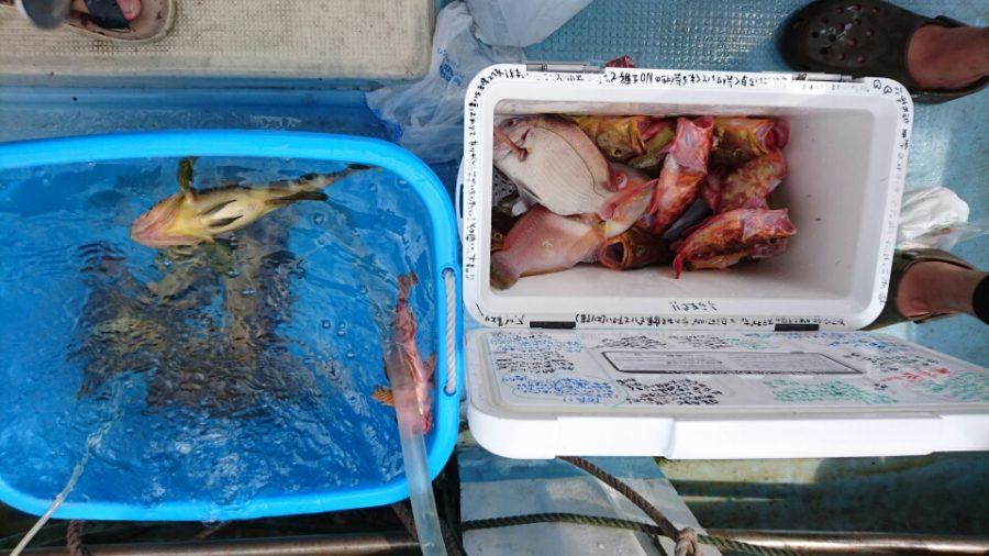 根魚、タイラバ